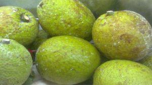 breadfruit-1