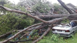 There were several reports of downed trees and poles crashing into vehicles